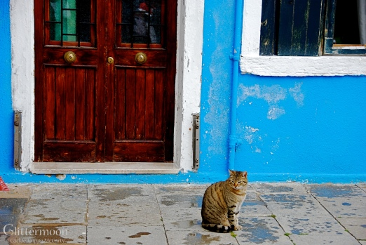Italian Tabbycat
