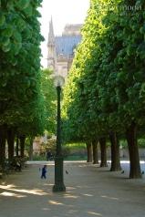 Behind Notre Dame