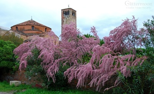 Tamarisk Tree on Torcello